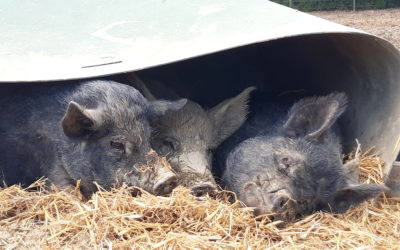Our visit to The Retreat Animal Sanctuary
